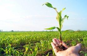 آینده روشن بخش کشاورزی با استارتاپها