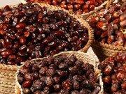 خریداری بیش از ۱۱۰۰ تن خرما از نخل داران در اهواز