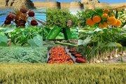 فرصت بیمه محصولات کشاورزی تا پایان آذر
