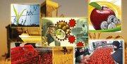 کاهش چشمگیر تولیدات کشاورزی با حذف معافیت مالیاتی