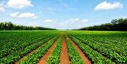 کشت انواع محصولات کشاورزی در خوزستان