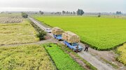 رئیس عشیره مزرعه: اجرای طرح رهبری باعث افزایش رفاه و رشد معیشت کشاورزان شد