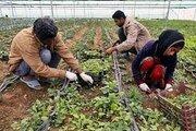 روزنمایی از طرح ملی بیمه اجتماعی روستایی عشایری؛ به زودی