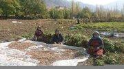 تسهیلات اشتغال و اولویت ساخت مسکن برای مددجویان روستایی